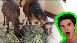 I PUT A PETTING ZOO IN BRENT'S NEW HOUSE?!!? prank wars