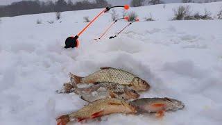 Зимняя рыбалка на Угре Ловля плотвы на Калужский шарик гвоздешарик и донки