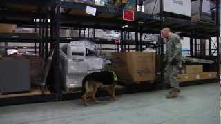 Military Working Dog Certification