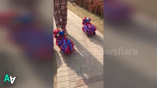 Man in China walks two Frenchies dressed in lion dance costumes