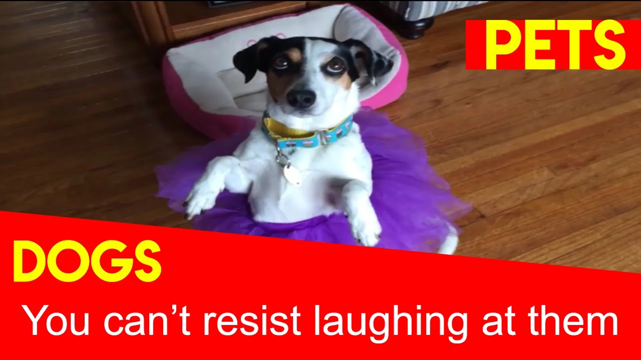 Laugh Out Loud Dogs
