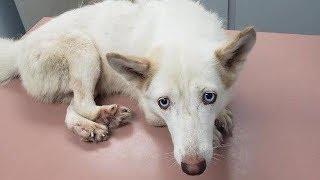 Женщина увидела в клетке собаку, у которой были сломаны лапы