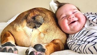 SWEET Moments of CUTE Babies and Dogs on the couch ★ Dog and Baby Videos