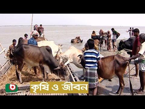 Krishi O Jibon | Jamuna Chorer  Krishi Jibon | Agriculture Development Program
