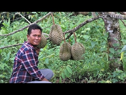BEST NgePRANK! Durian MONTONG Kok Dikatain BAWOR Di Kebun Durian 15 Hektar