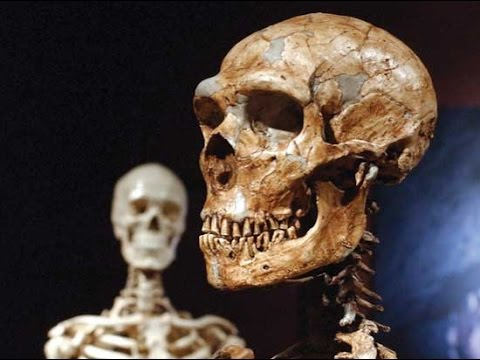 The Jinn and Tonic Show - Is the Show going to die? - Are Muslims Neanderthal?