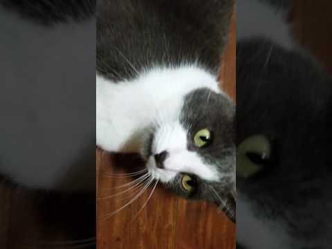 Amazing Cat Does Housework
