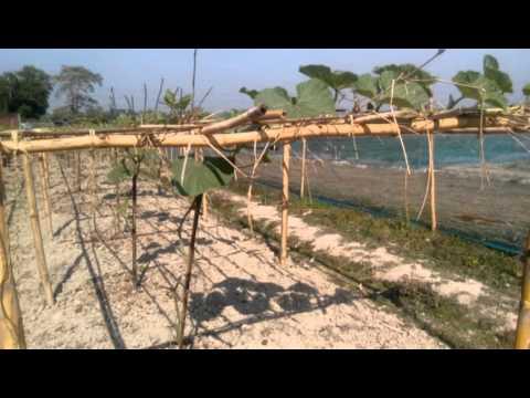Organic agro project in Bangladesh..