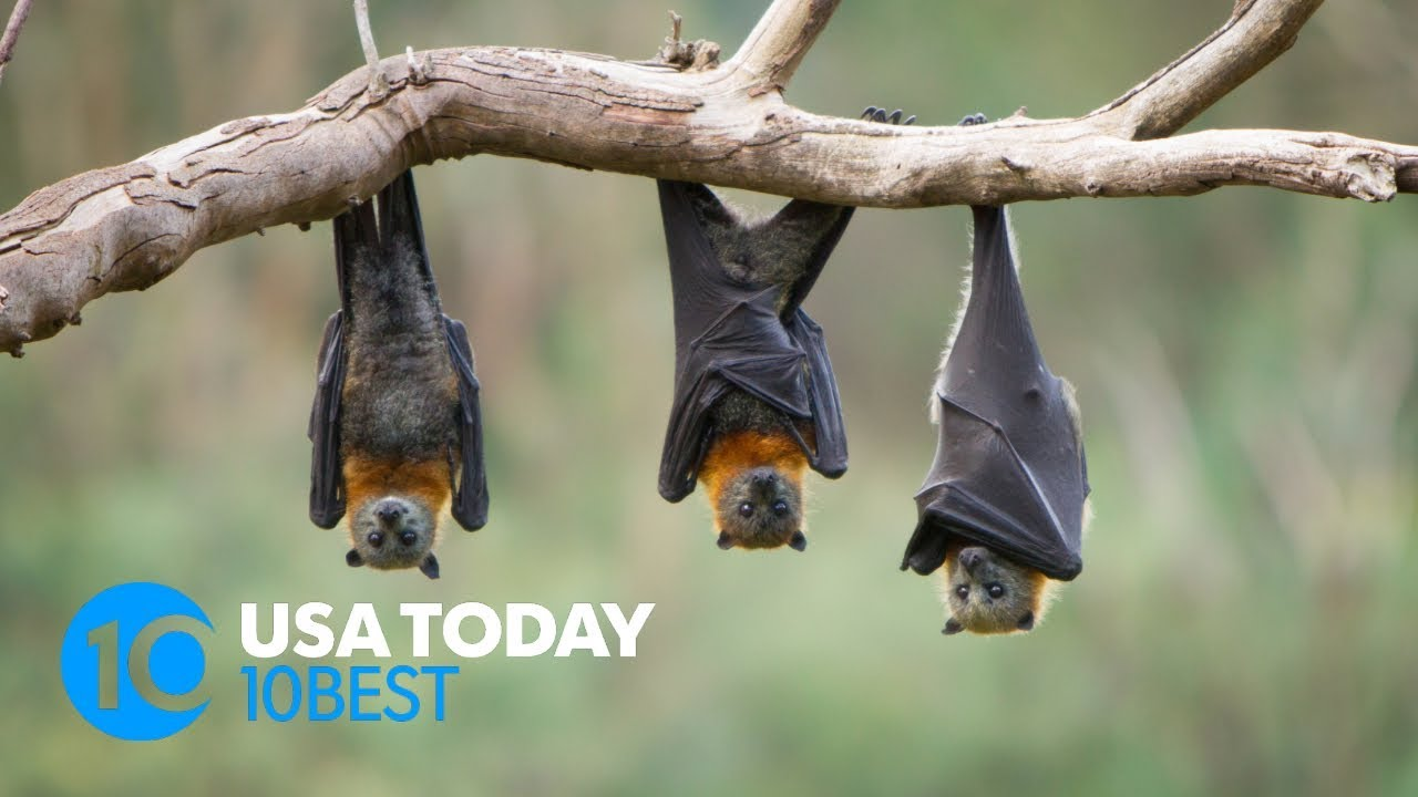 10 places to see bats