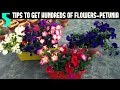 How to Keep your Petunias Looking Full and Flowering- PETUNIA CARE