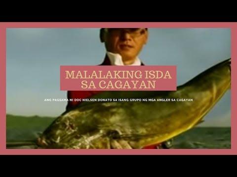 Mga isdang mas malaki pa sa tao, nahuhuli sa Cagayan