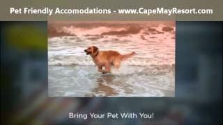 Cape May Nj Pool And Pet Friendly House Rentals