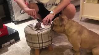 Funny animals vines - Dog rection to Cutting Cake