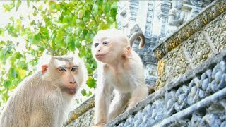 Wow, monkey baby Rocky playing on tree so happy.Suddenly Rocky do face playboy,so cute#99