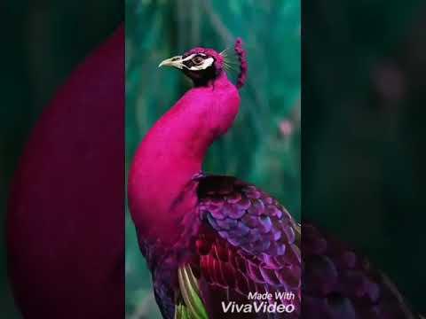 Красная книга удивительные птицы