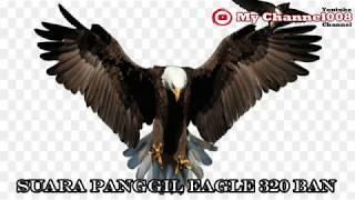 SUARA PANGGIL WALET EAGLE 320#BAN#