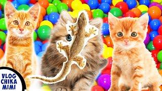 Kumpulan Lagu Anak Si Meong Kucing Lucu Mandi Bola dan Lagu Cicak Di Dinding