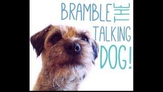 Bramble The Adorable Talking Dog!