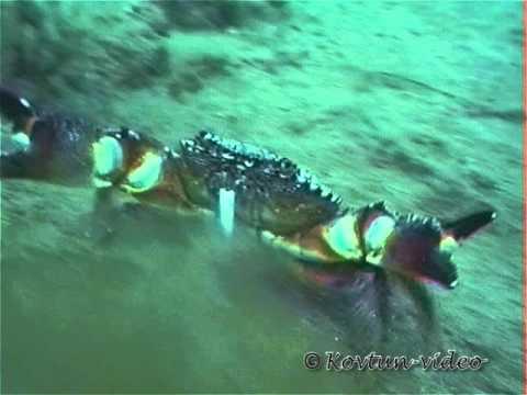 медуза фото видео