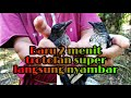 Mikat Kacer Liar Dapat Trotolan Super Part   Mp3 - Mp4 Download