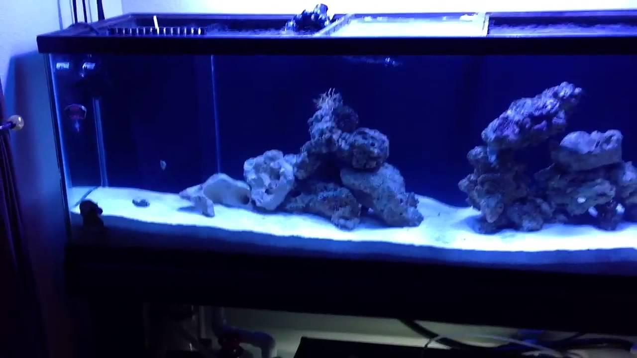 Saltwater Aquarium 100g Shark Tank Two Months Old