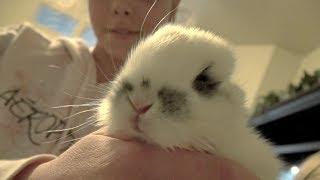 Saving Orphaned Baby Bunnies! thumbnail