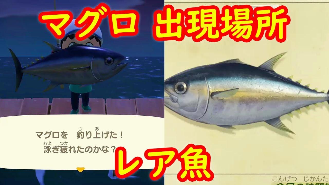 あつ森桟橋で釣れる魚