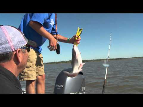 Crazy Blue Catfish Action on Truman Lake