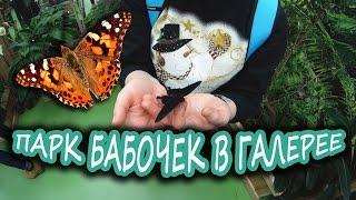 Парк Бабочек в ТРК Галерея (Санкт-Петербург)(Побывали в парке бабочек в Галерее. Ссылка на парк: http://park-babochek.ru/ Небольшое помещение с разводней, в которо..., 2016-02-26T19:19:51.000Z)