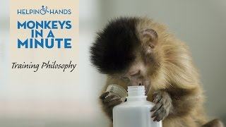 Training Service Monkeys: Monkey See, Monkey Do - Monkeys In A Minute