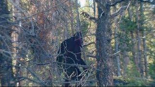 Bigfoot Sighting   called into an internet radio show