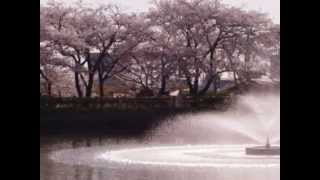 昔があるから 前川清 cover sthiro 写真は和子さんからお借りしました.