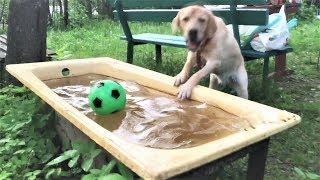 Download Смешные собаки 2018 Приколы с Собаками ТОПовая подборка Funny Dogs Compilation 2018 #1 Mp3 and Videos