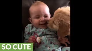 Sweet puppy gives baby precious kisses