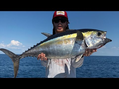 GATOR GANG CRAZY OFFSHORE FISHING!!! Barracuda, Tuna, Sharks, and MORE!!!