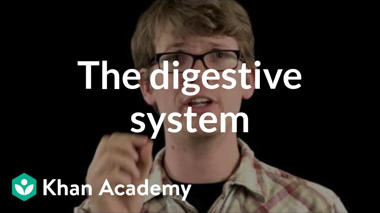 medium resolution of The digestive system (video)   Khan Academy