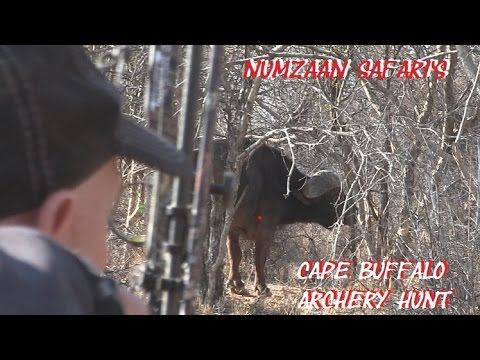 Cape Buffalo bow hunt in Africa DANGEROUS GAME arrow Shot placement on African Buffalo hunt POV