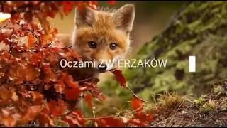 14 zwierząt które cieszą się ze już jesień