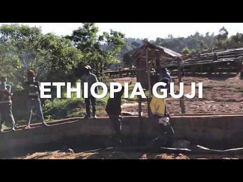 Ethiopia Coffee Trip