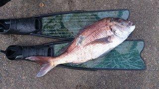 透明度の高い日本海で魚突きの撮影にトライしてきました。 毎週のように...