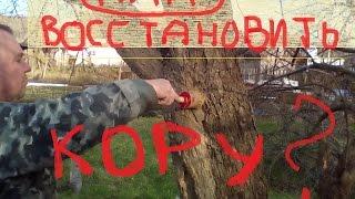 Восстанавливаем кору дерева