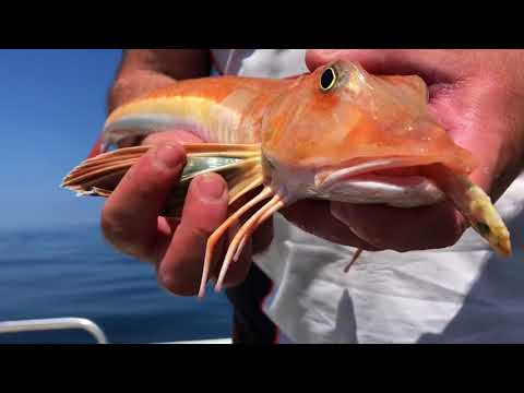 Hunting Turbot Brill And Lobsters + Local Tackle Shop (Micks Fishing Supplies)