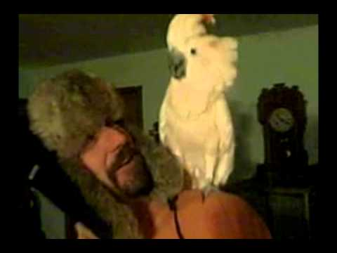 Sammy the Evil Trash Talking Bipolar Bird