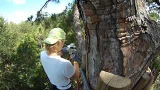 Treetop Trek zipline at Brevard Zoo Melbourne, Florida