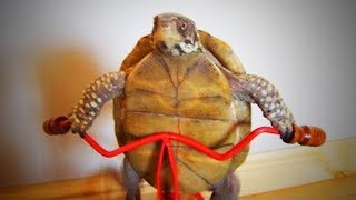 Funny Tortoise  😂🐢 Funny Tortoise Doing Things Funny (Part 2) [Funny Pets]