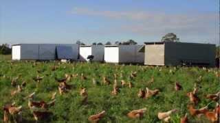 Pastured Range Egg Farming with Chicken Caravans
