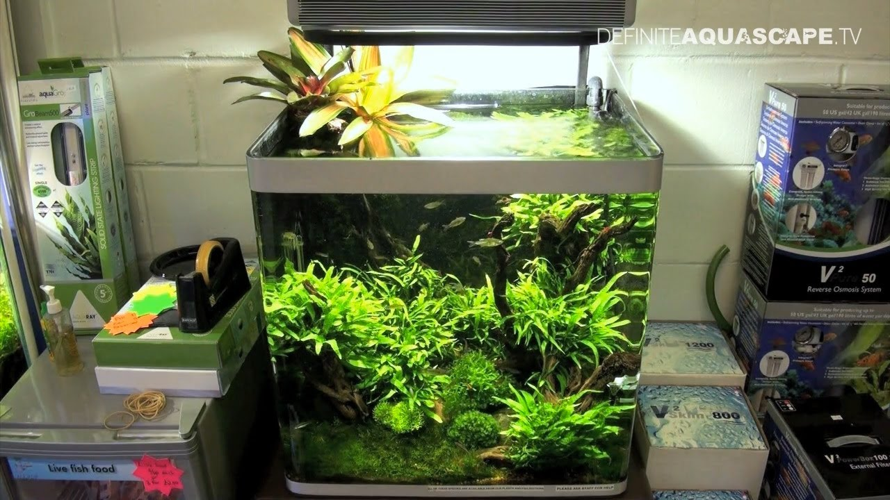 Delightful Aquascaping   Aquarium Ideas From Aquatics Live 2011, Part 2   YouTube