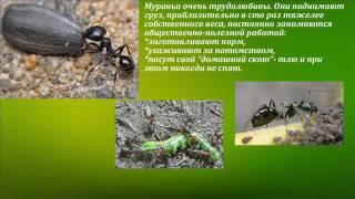 Слайд фильм муравьи  санитары леса