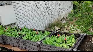 Publication Date: 2021-04-08   Video Title: 仁濟醫院靚次伯紀念中學 - 綠色生活教育 - 智能灌溉