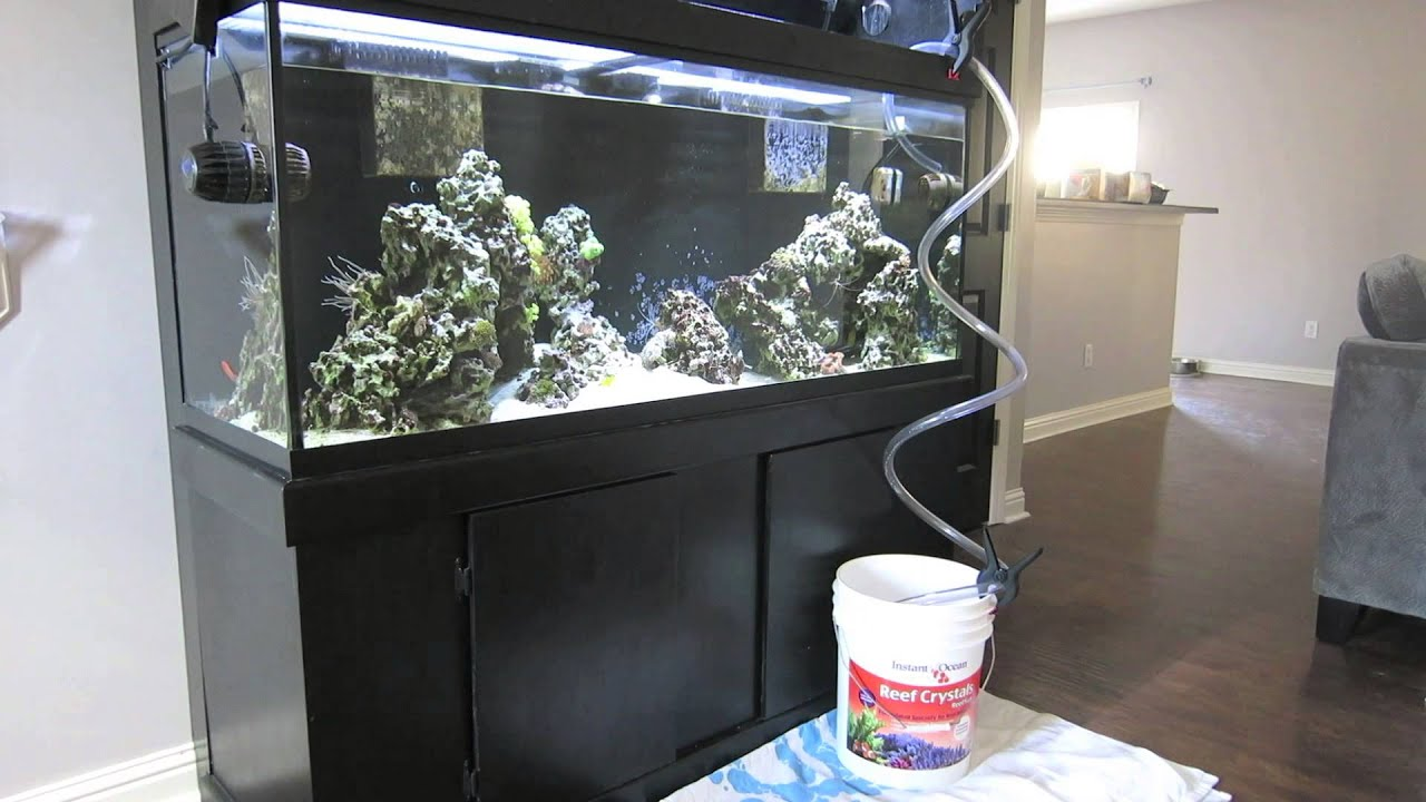Fish tank quarantine - New Fish Part 1 Quarantine Tank Setup